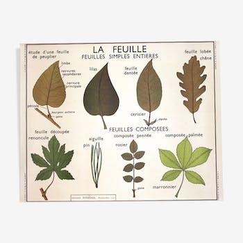 "Affiche botanique ""la feuille"" Rossignol"