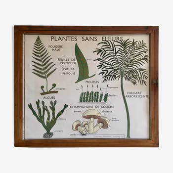 Educational poster Rossignol flower-free plants and plant classification years 60
