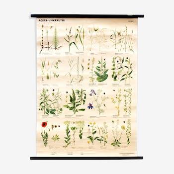 Affiche pédagogique plantes 1969