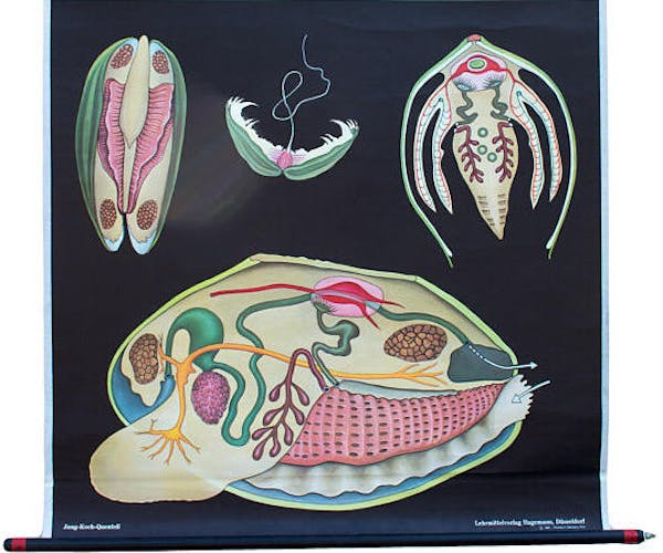 1974 Common Mold Educational Poster