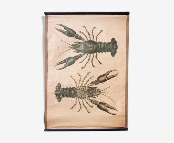 1914 Lobster Educational Poster