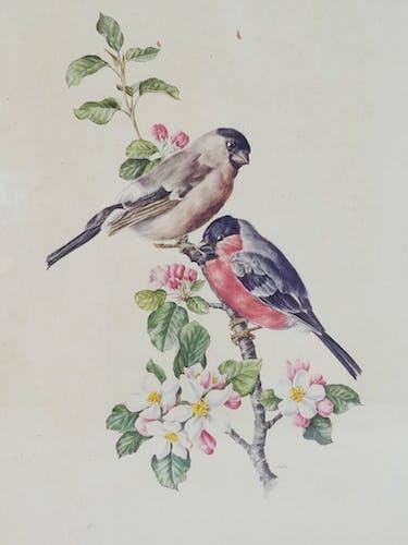 Lithographie oiseaux Bouvreuil male et femelle cadre doré
