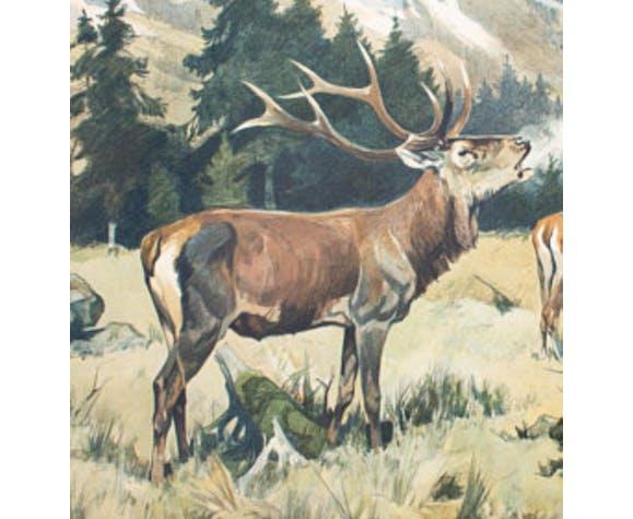 "Poster ""Deer"" educational rack Franz Roubal 1925"