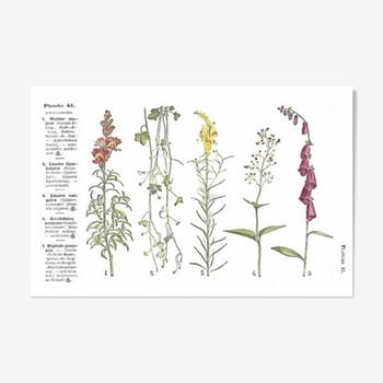Small botanical boards