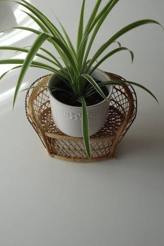 Porte plantes en rotin années 1970