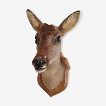 Deer naturalized