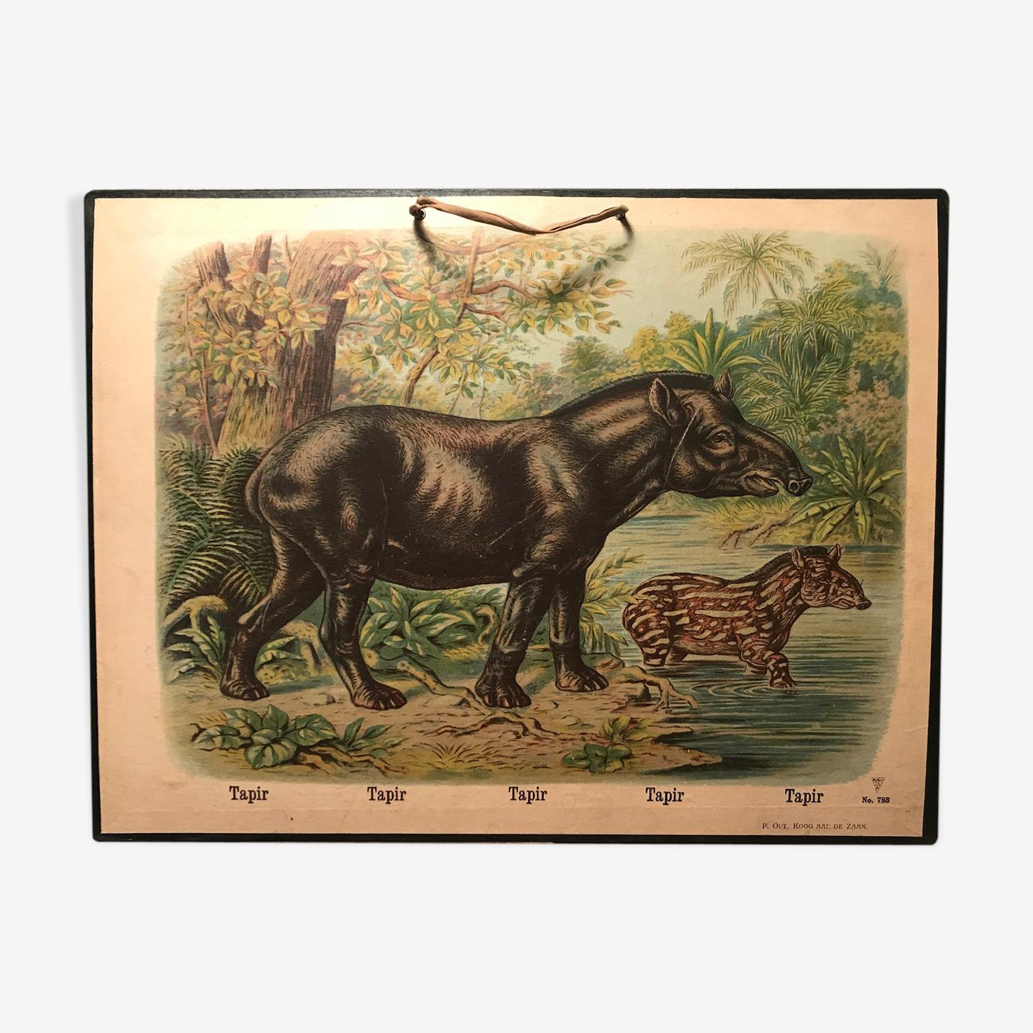Affiche scolaire ancienne le tapir