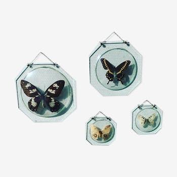 Papillons naturalisés sous globe de verre Napoleon III