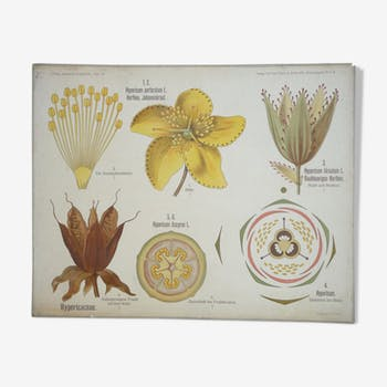 Original botanical study board
