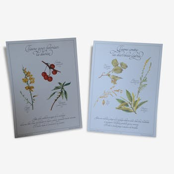 Botanical plates