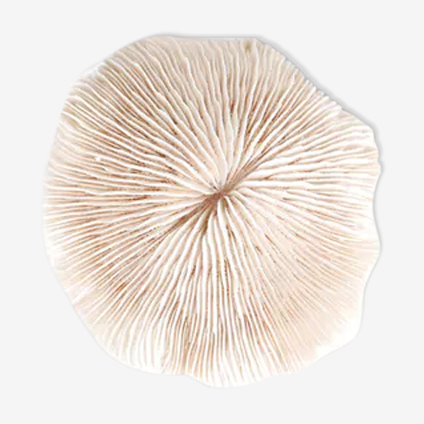 Corail blanc années 70