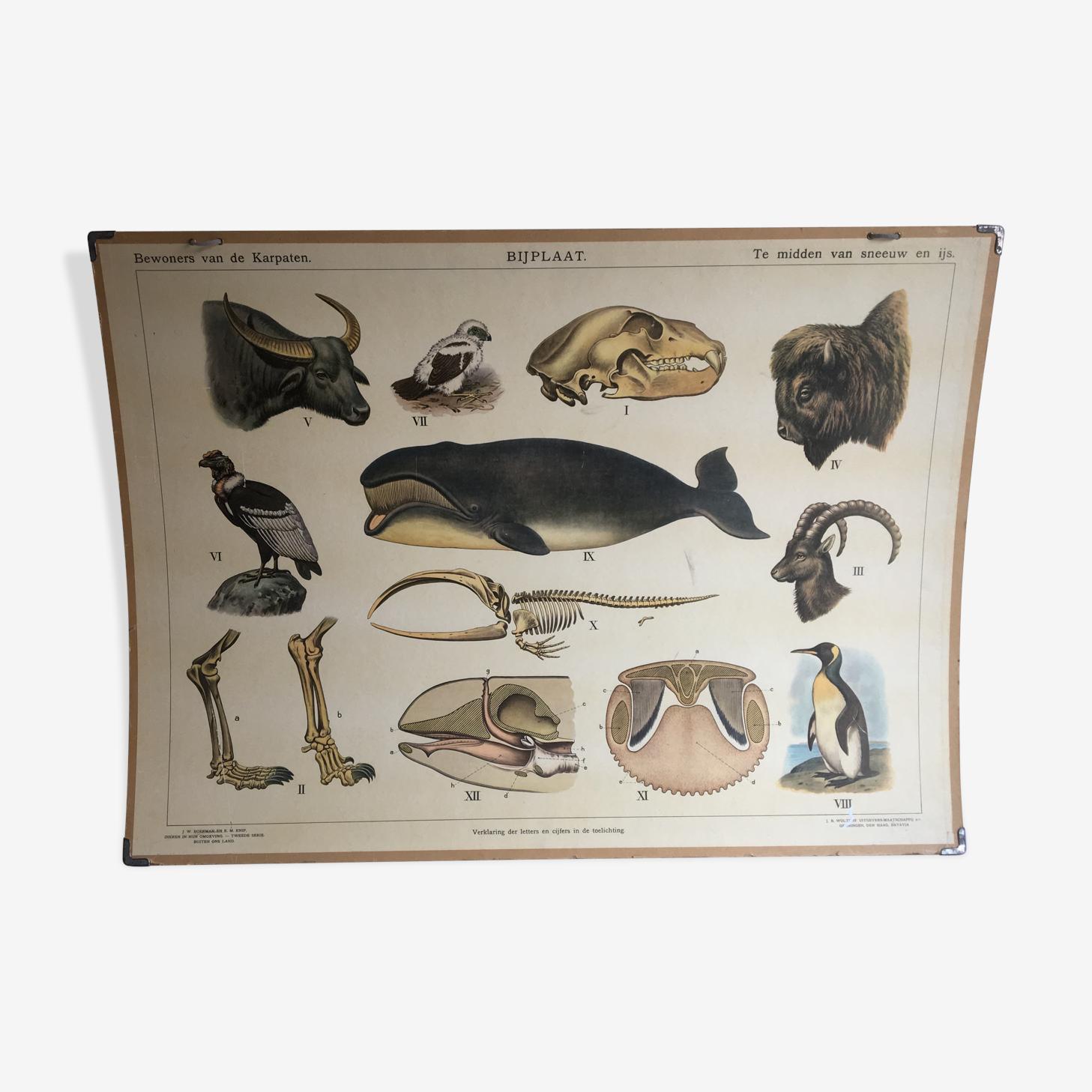 Educational chart,  lithograph