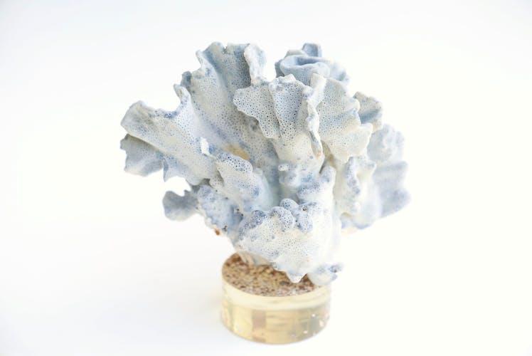 Branche de corail bleu sur socle en résine, années 70