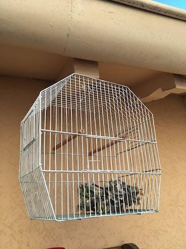 Cage à oiseaux ancienne en métal