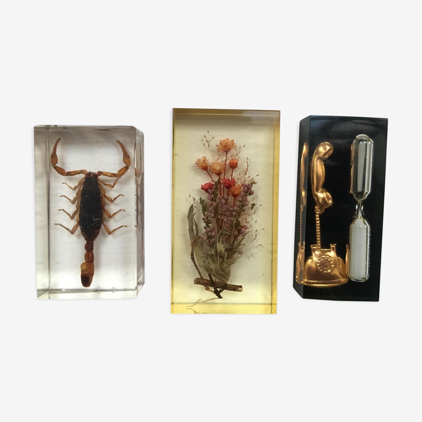 Inclusions insecte cabinet de curiosité scorpion