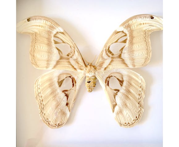 Naturalized butterfly frame