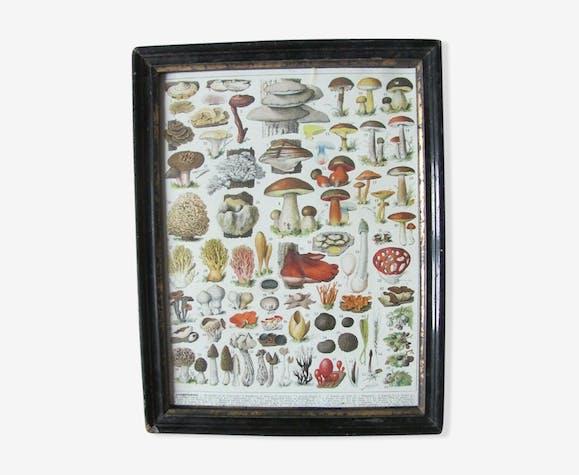 Cadre Ancien Avec Planche Botanique Champignons Deco Cuisine