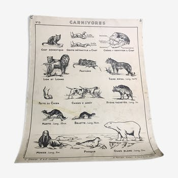Old poster on carnivores & rodents