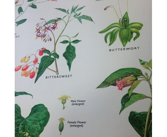 School poster of miscellaneous plant families V