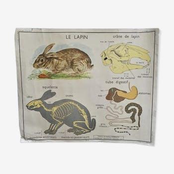 Affiche scolaire Rossignol Le lapin Le cheval