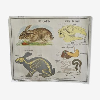 School poster Rossignol The Rabbit The Horse