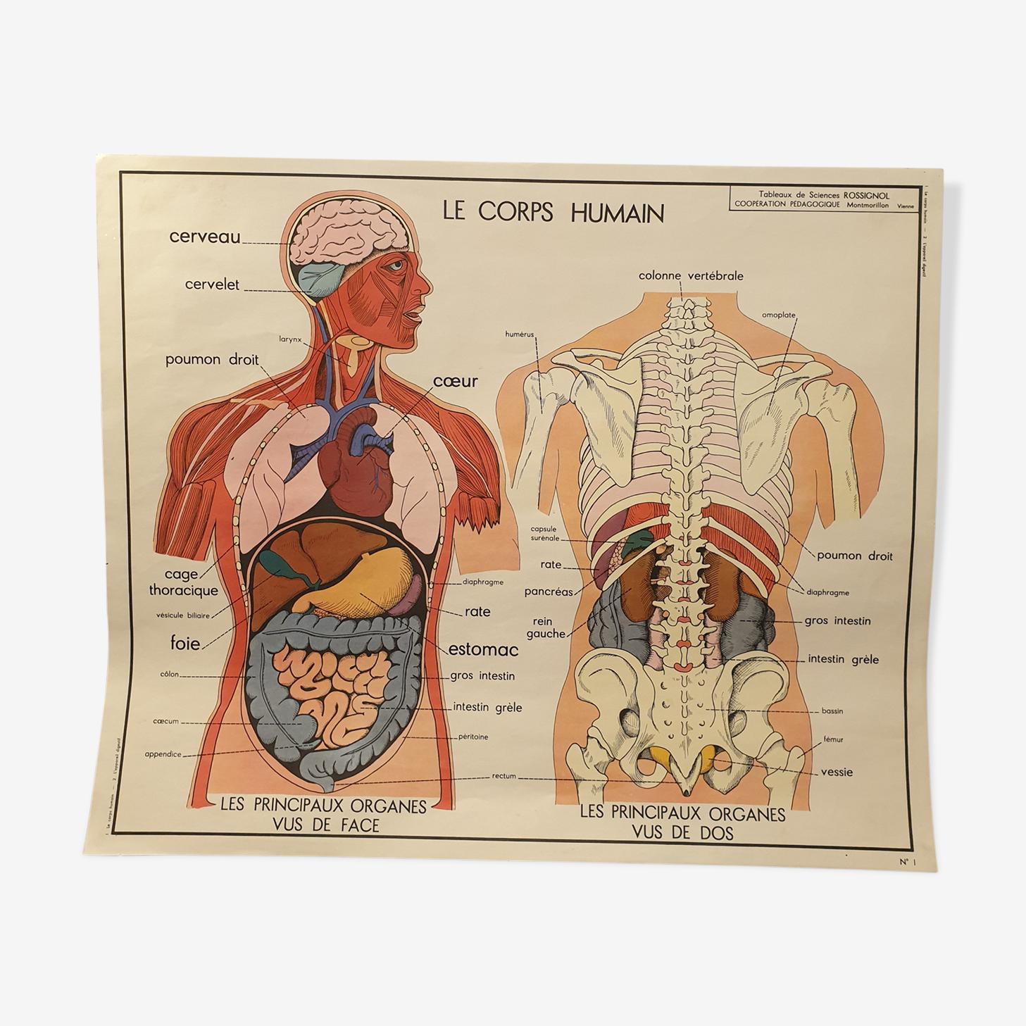 Carte Rossignol corps humain