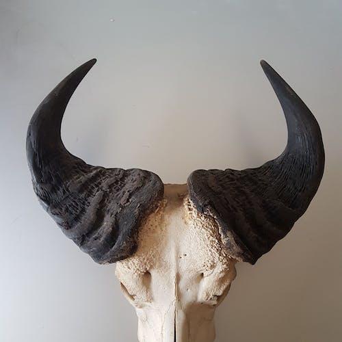 Crane buffalo taxidermy massacre