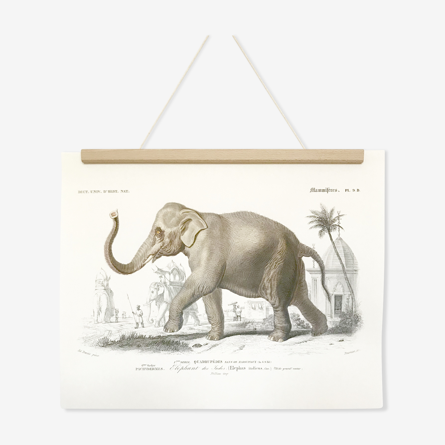 Displayed in colors representative of the Asian elephant