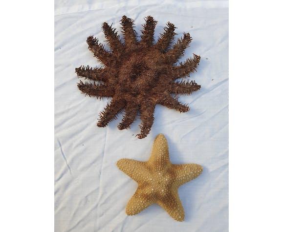 Lot de 6 étoiles de mer