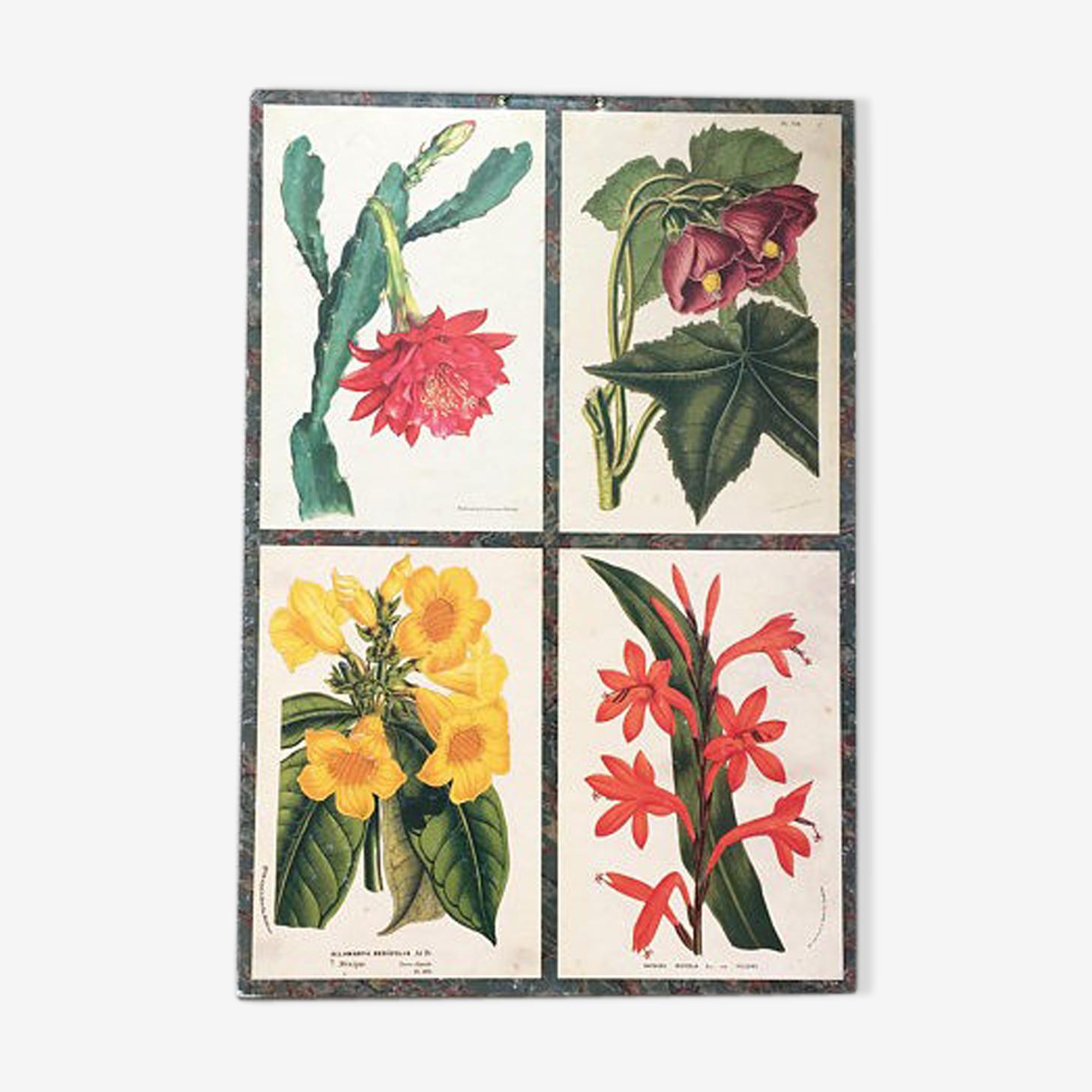 Affiche botanique vintage
