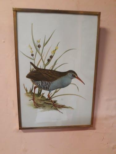Illustration botanique oiseau