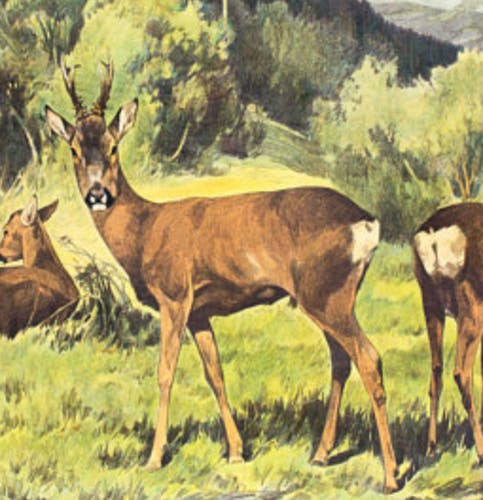 "Poster ""Deer"" educational rack Franz Roubal 1925"