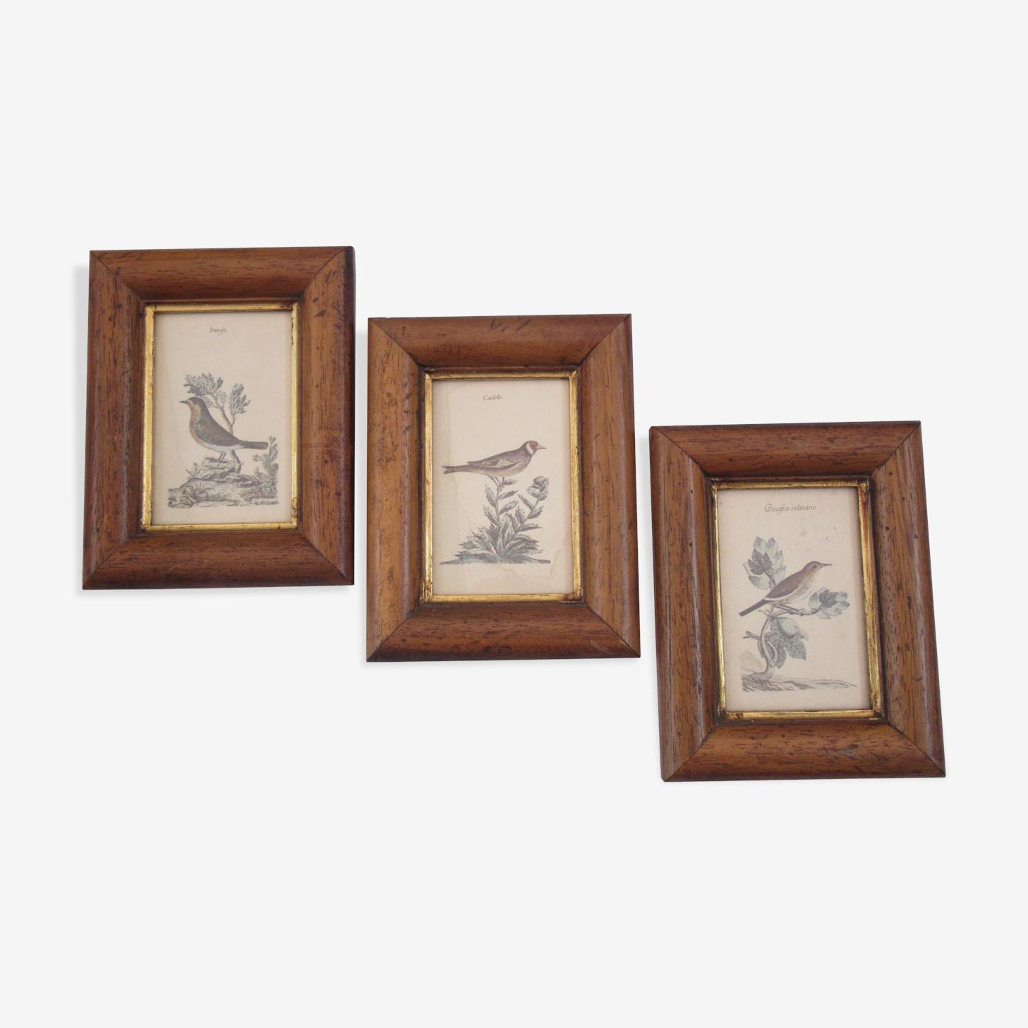 Trois cadres d'oiseaux