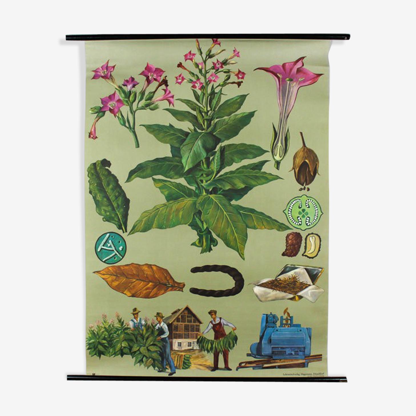 """Affiche murale de l'école de Jung-Koch-Quentell """"tabac"""" 1972"""
