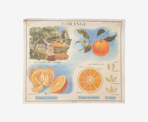 Affiche pédagogique Rossignol vintage