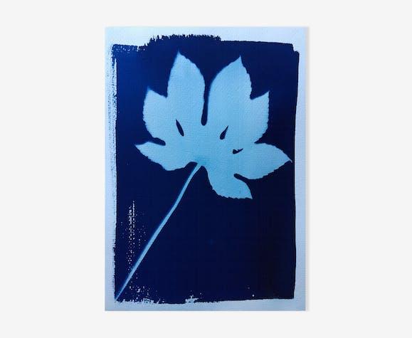 Cyanotype botanique