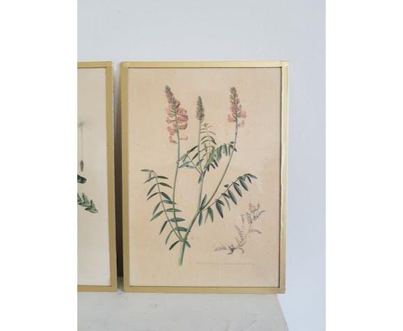 Lot of 3 botanical boards