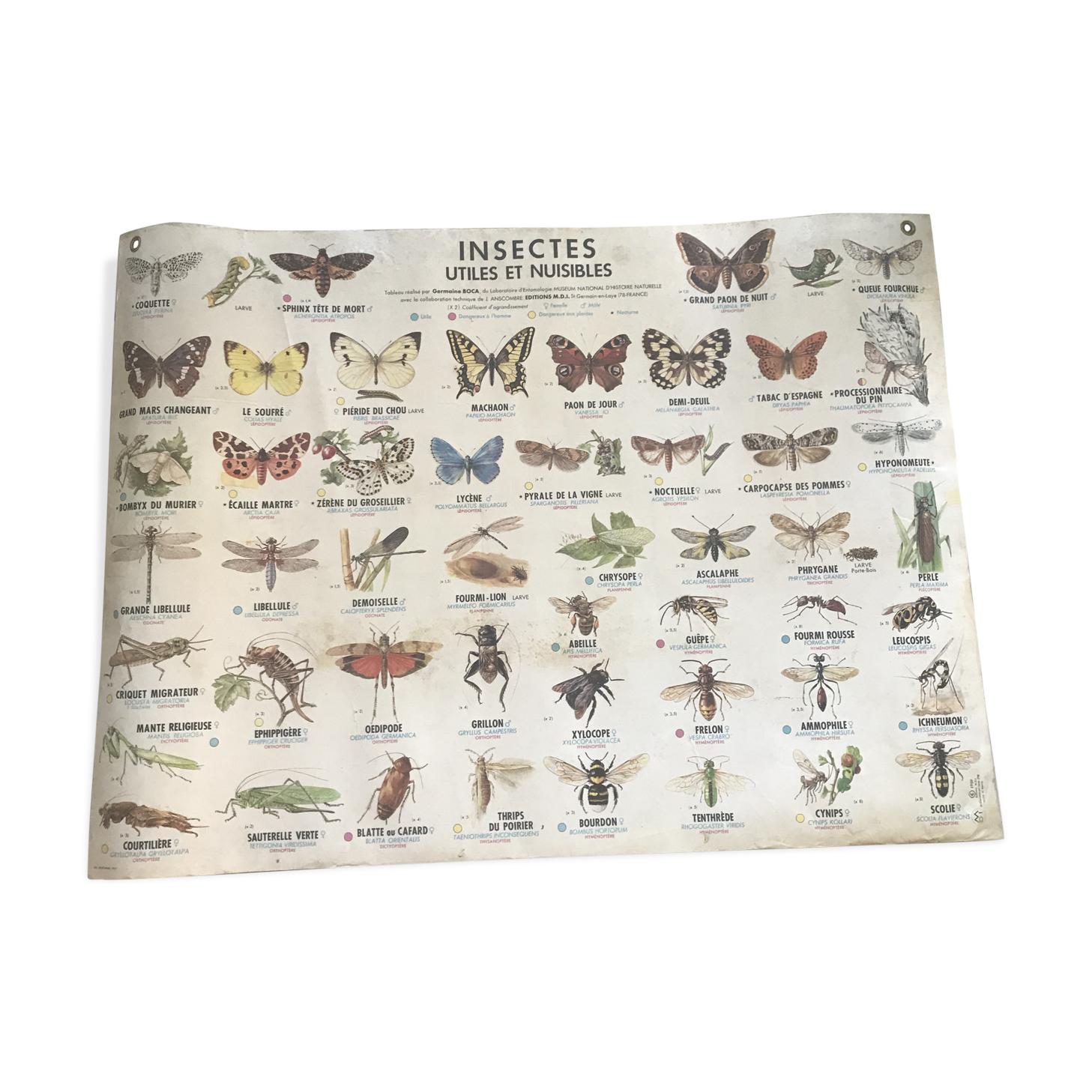 Carte d'école les insectes 1969