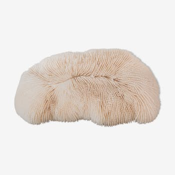 Ancient white coral 23 cm