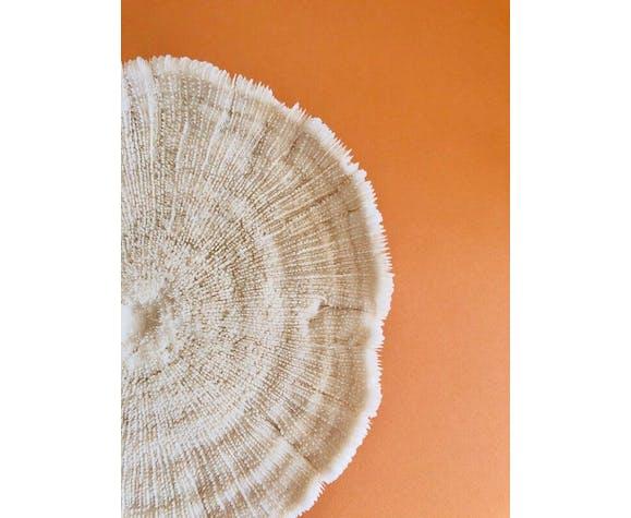 Corail fungia