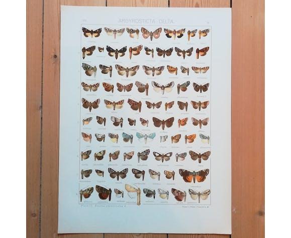 Affiches de lépidoptères