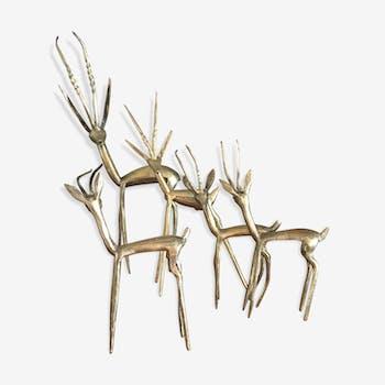 Gazelle ou antilope laiton