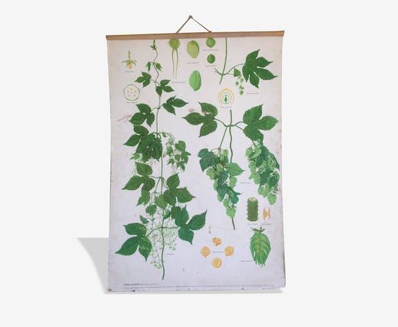 Planches botaniques