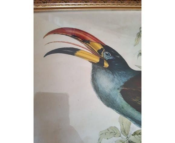 Gravure vintage ornithologique