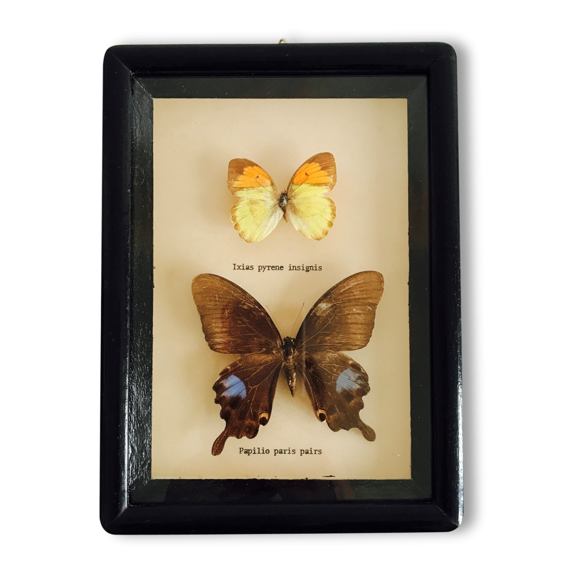 Cadre noir 2 papillons (n°1) Asie du sud-est des années 60