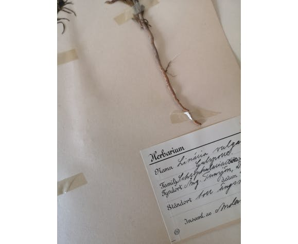 L'herbier d'Anders - planches d'herbier ancien suédois