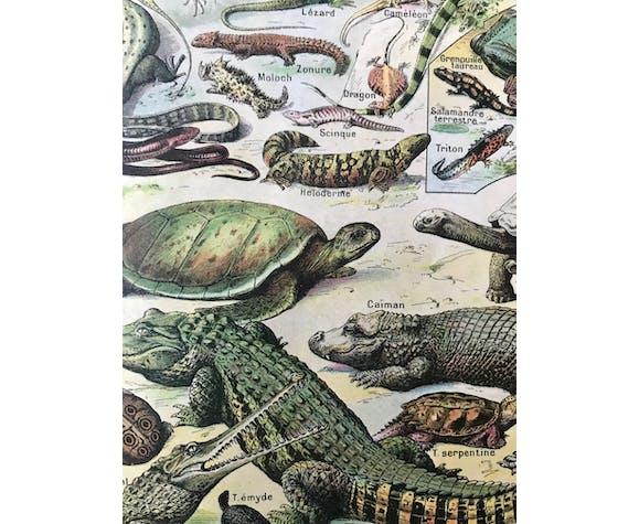 Planche animalière ancienne reptiles