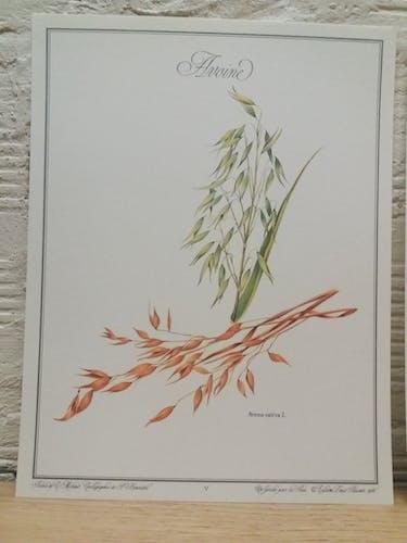 Lot 3 planches botaniques Soja - Maïs - Avoine