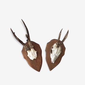 Trophies of deer vintage 70's