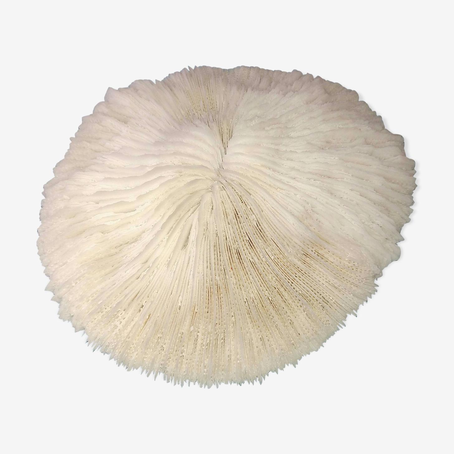 Corail champignon blanc ancien